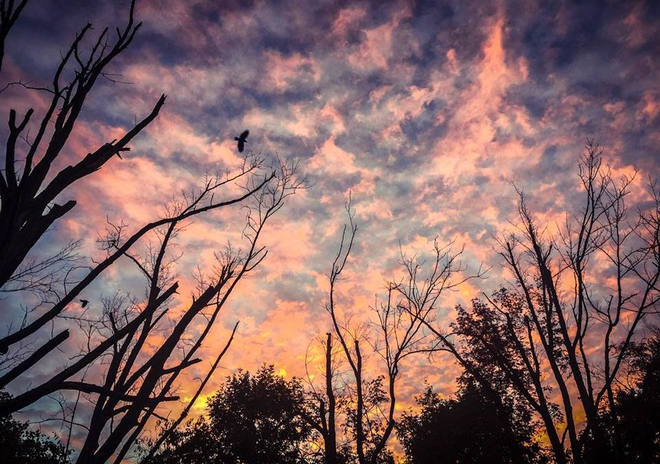 Samhain By Mandi Garrison